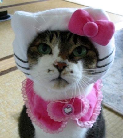 fotos hello kitty